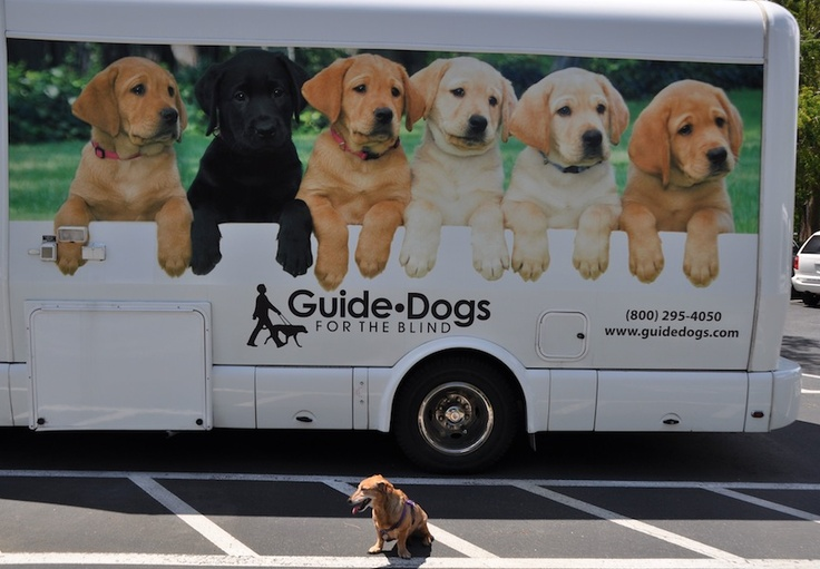 how guide dogs help the blind