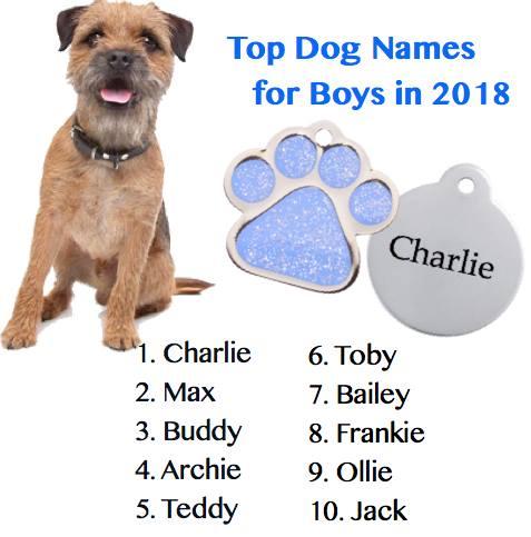 guide dogs pet insurance australia