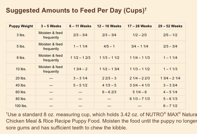 fish for dogs feeding guide