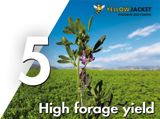 weed control in lucerne and pastures guide