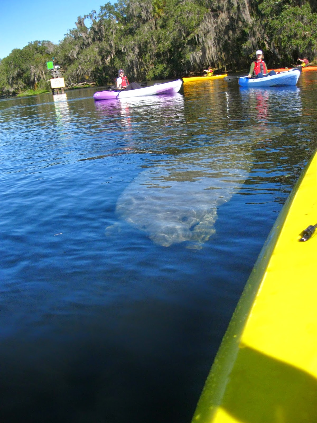 guided kayak tours near me