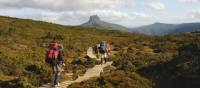 south coast track tasmania guided walk